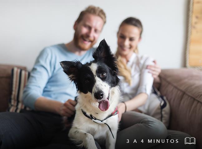 Cuida a tu perro con tecnología smart.